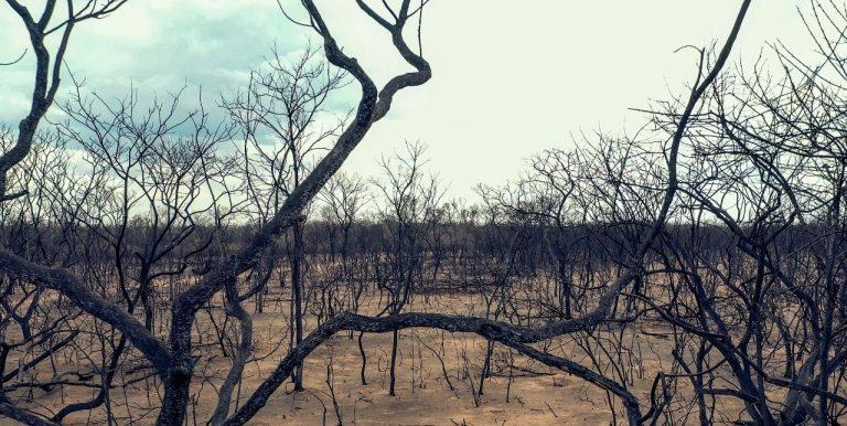 Ett landskap av nedbrunnen skog i Chiquitania, Bolivia.