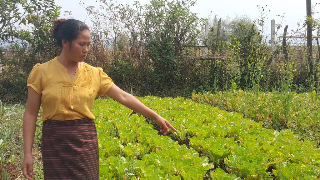 Jordbrukaren Kham Kheng i Laos visar upp sin ekologiska odling.