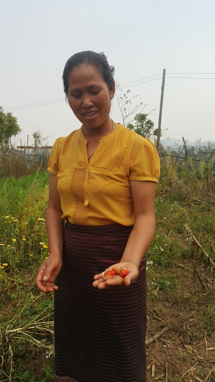 Jordbrukaren Kham Kheng i Laos visar upp ekologiska jordgubbar.