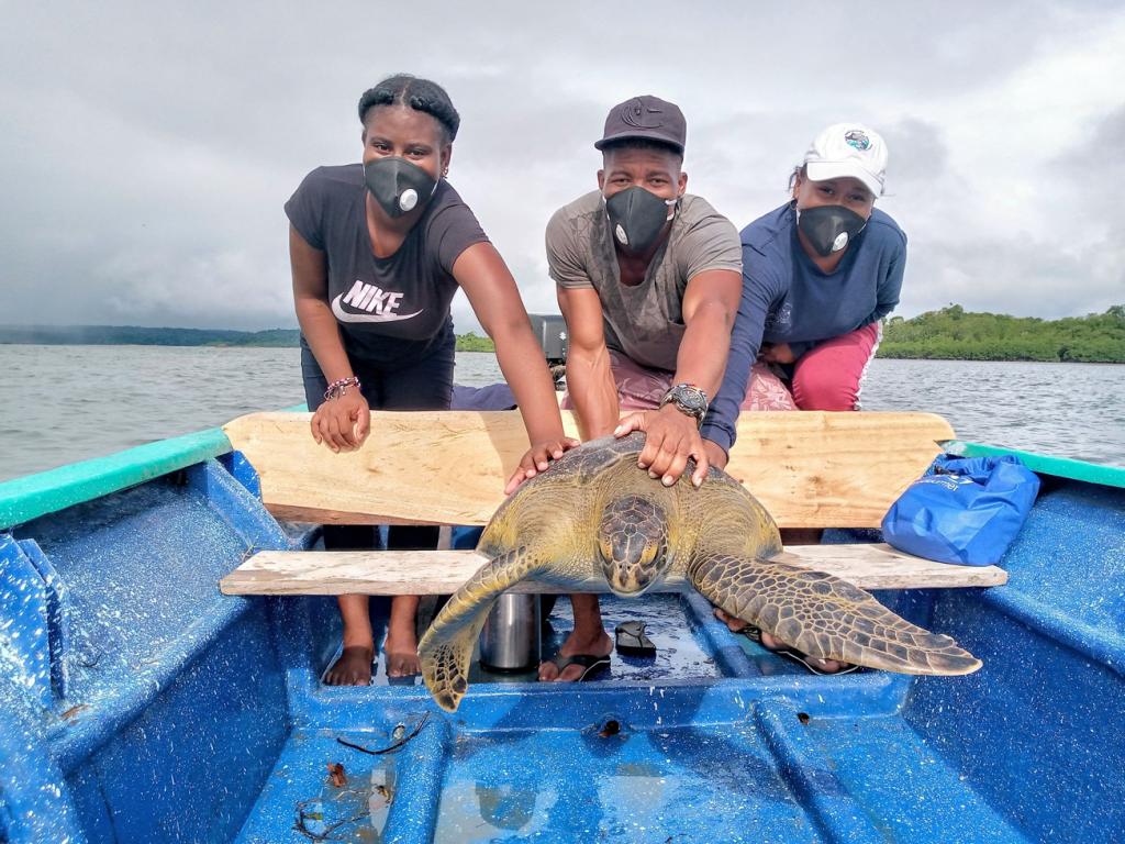 Två unga kvinnor och en man står bakom en liten blå båt. De håller sina händer på en stor havssköldpadda. De bär munskydd och kepsar.